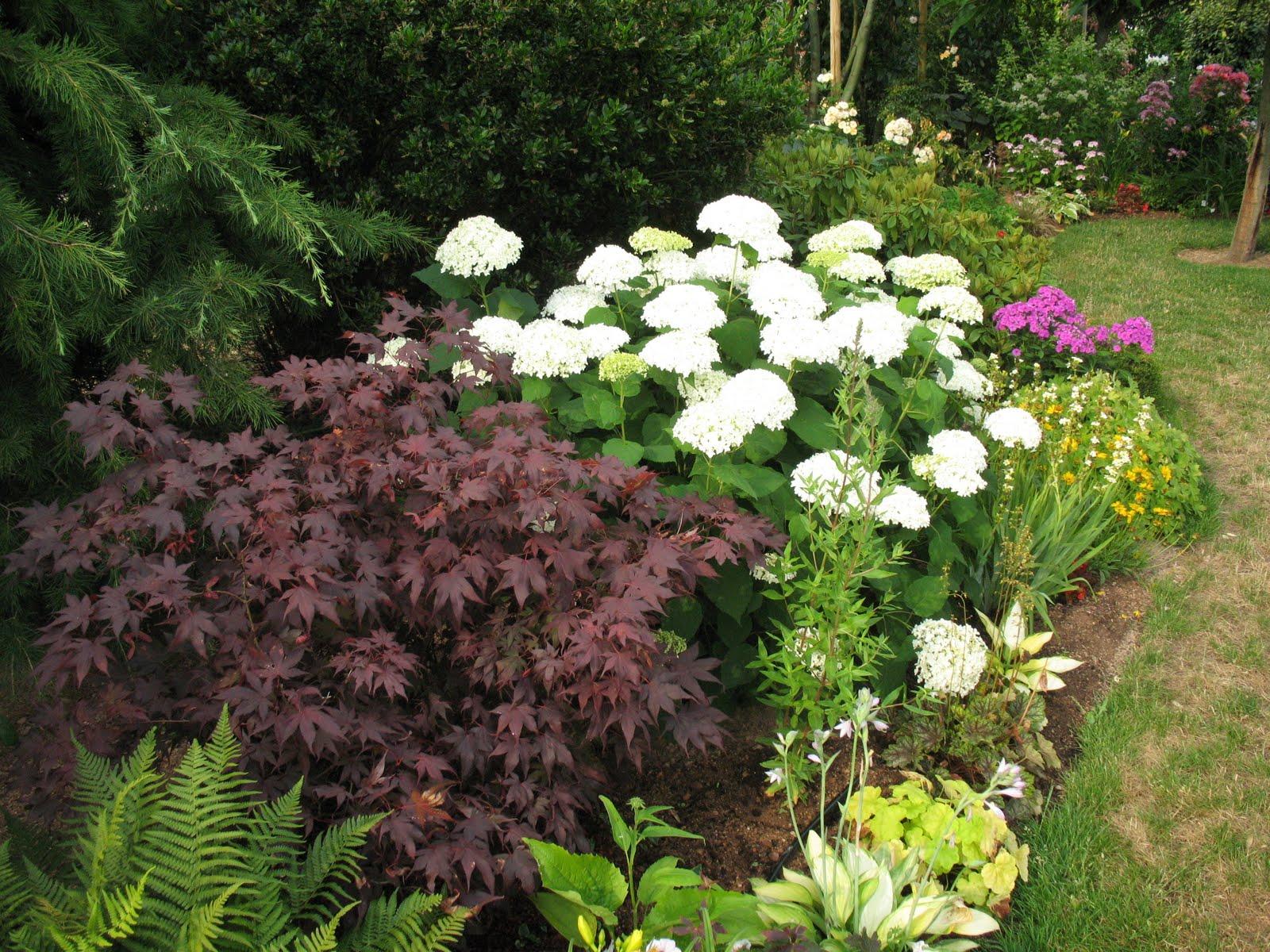 Roses du jardin ch neland hydrang a arborescens annabelle - Association plantes aromatiques entre elles ...