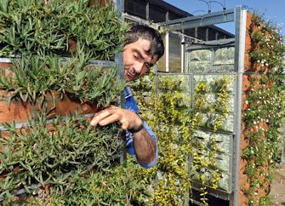 Vertical Garden – Reviwall