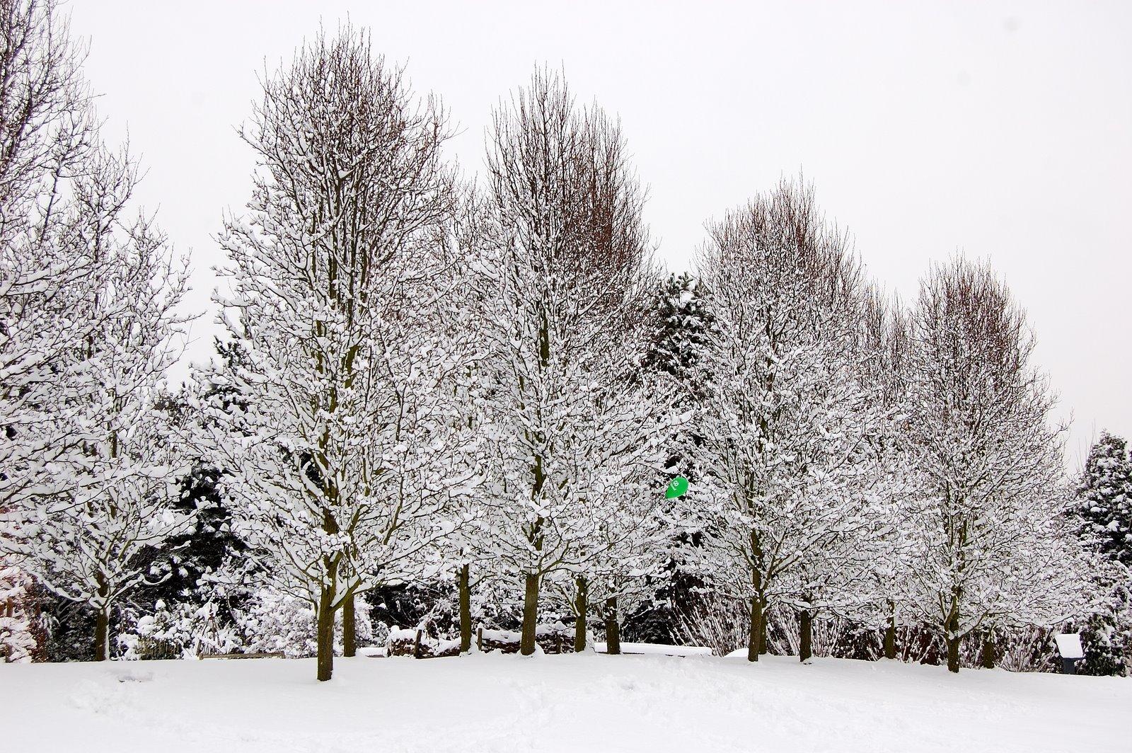 [Kew+in+the+snow+Jan+092009-02-02_51.JPG]