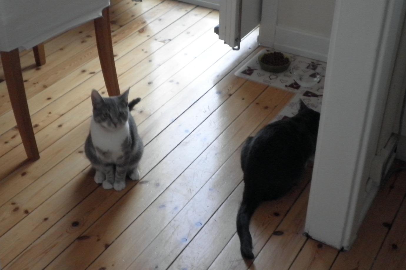 Tre katter undkom lagenhetsbrand