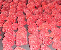 Raspberries ready for freezing