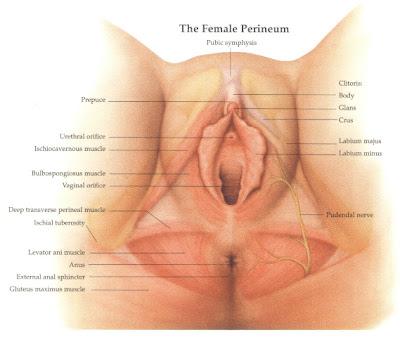 muslim women circumcision