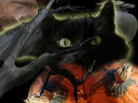 Halloween Free Wallpapers Cat Halloween Wallpaper Halloween Black Cat Wallpapers