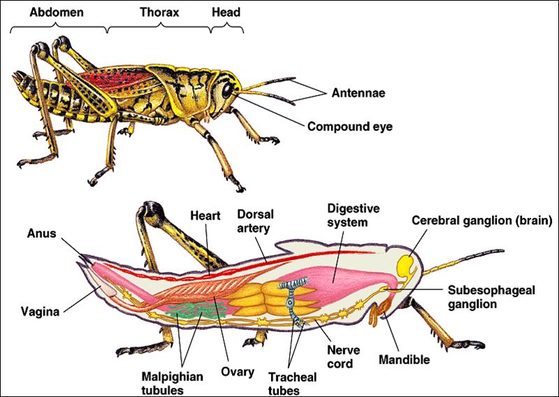 Contoh Hewan Mamalia Aves Pisces Amphibia Reptilia - Mi Putri