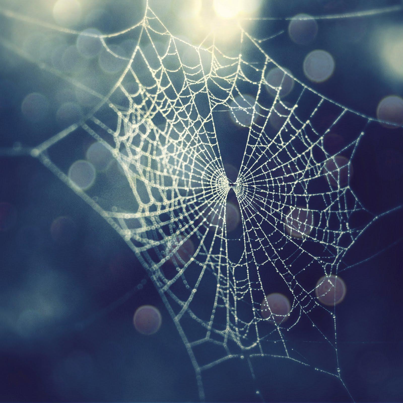 Spider Web Halloween Decorations: Spider Webs, Goddesses And Ravens