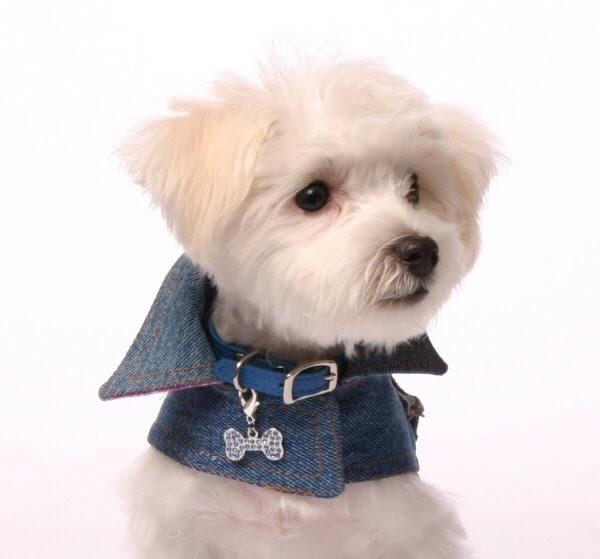 De perro vi - 2 part 6