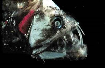 9 Monster Laut Mengerikan Yang Pernah Ditemukan Manusia
