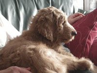 Pal-10 Weeks Old