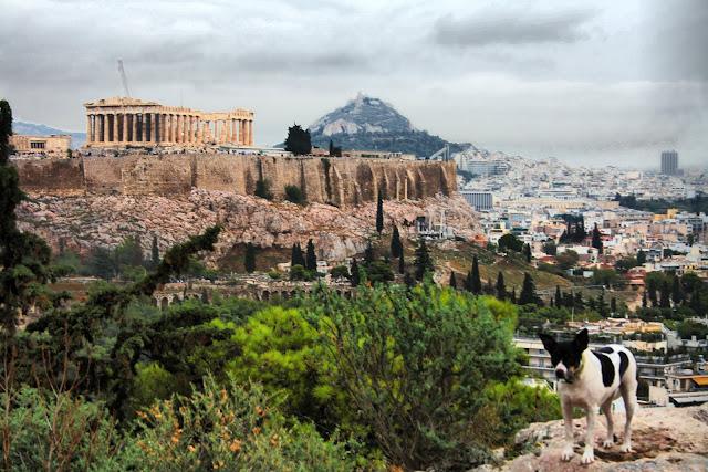 Perros de Atenas