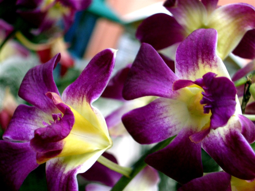 Tropical Island Flowers: BEAUTIFUL ISLAND: Tropical Flowers