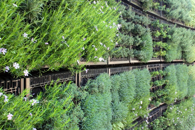 Plant To Plate: Herb Wall