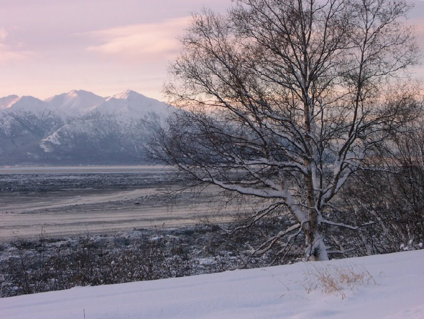 Alaska Yukon Animals