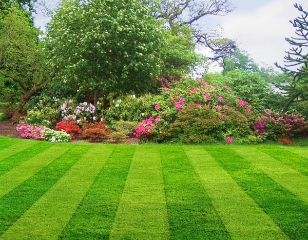 Absolutely Bushed When To Re Seed Or Sod Your Lawn