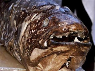 Another Pale Blue Dot: Prehistoric fish found alive