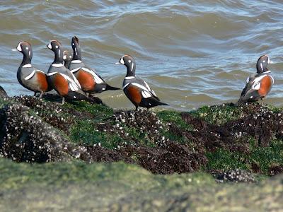 Ohio Birds And Biodiversity December 2009