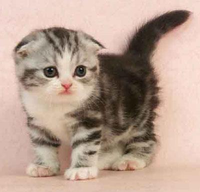 貓咪的窩: 我們對貓咪的自我要求