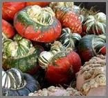 turban gourds