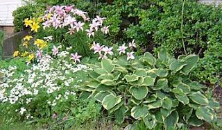 part sun hosta planting