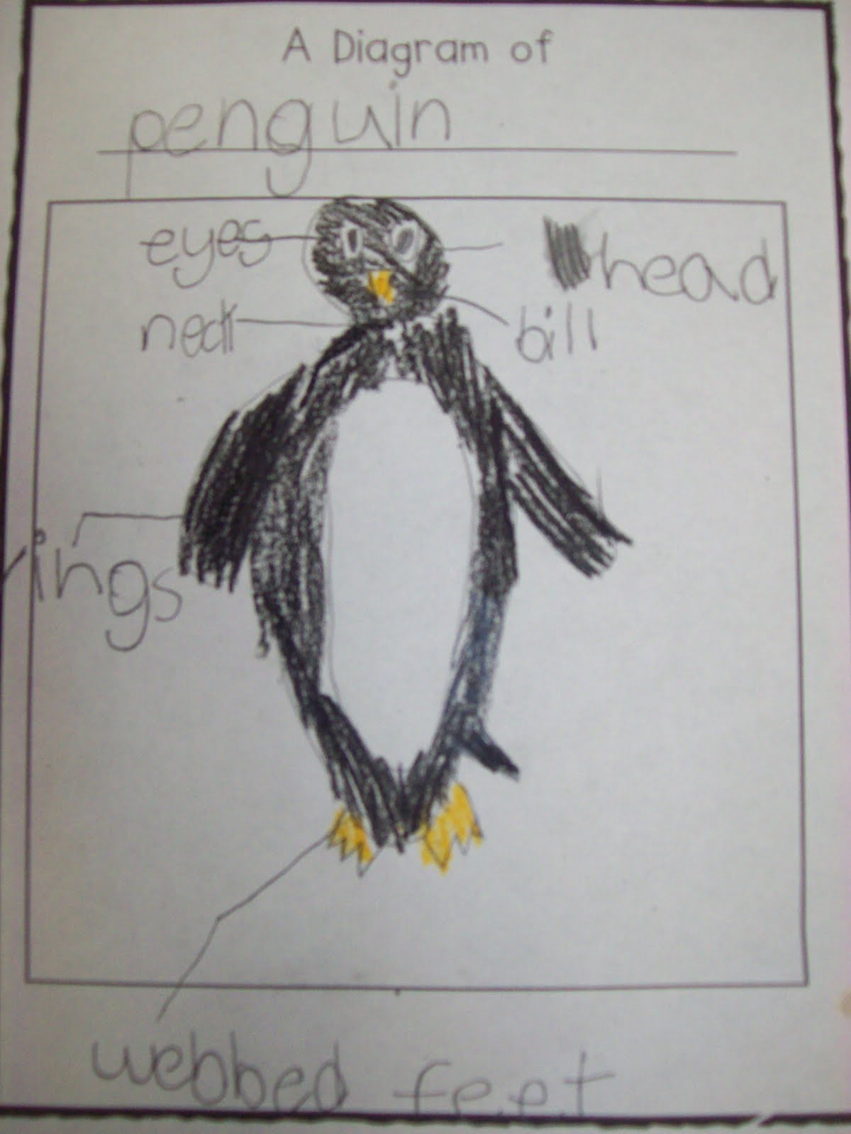 Chalk Talk A Kindergarten Blog Penguin Brace Map