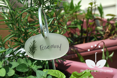 Rosemary plant label