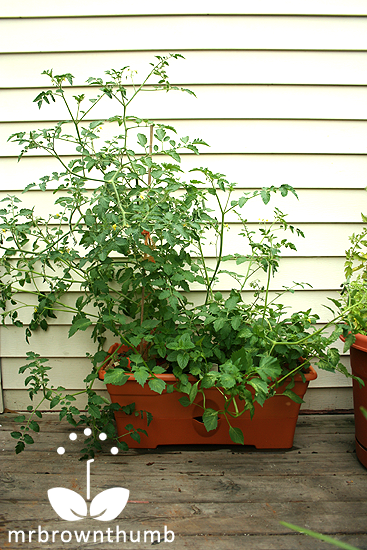 The Garden Patch Grow Box : MrBrownThumb