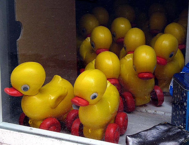Plastic ducks with wheels in a shop window, Livorno