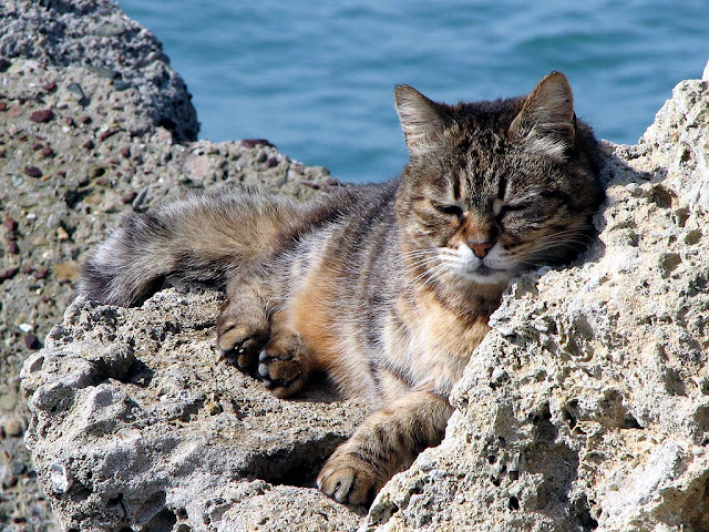 King of the Harbour, cat, Porto Mediceo, Livorno