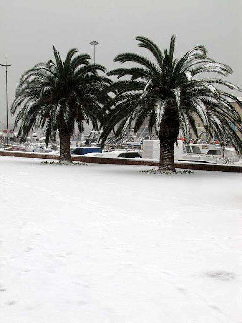Palm trees, snow, Livorno