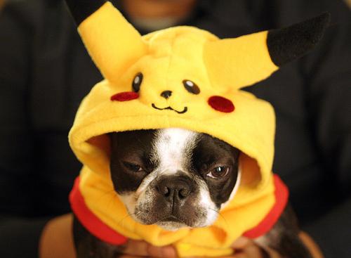 LEGO AND TOYS: Pokemon Dog Suit