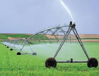 Cultivo y riego de trigo con pivot central