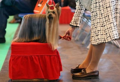 Craziest Dog Haircut Seen On www.coolpicturegallery.us