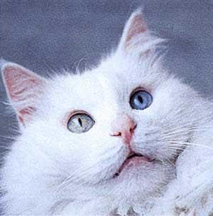 Gambar Kucing Yang Menggemaskan godean.web.id
