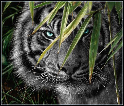black tiger animal - photo #5