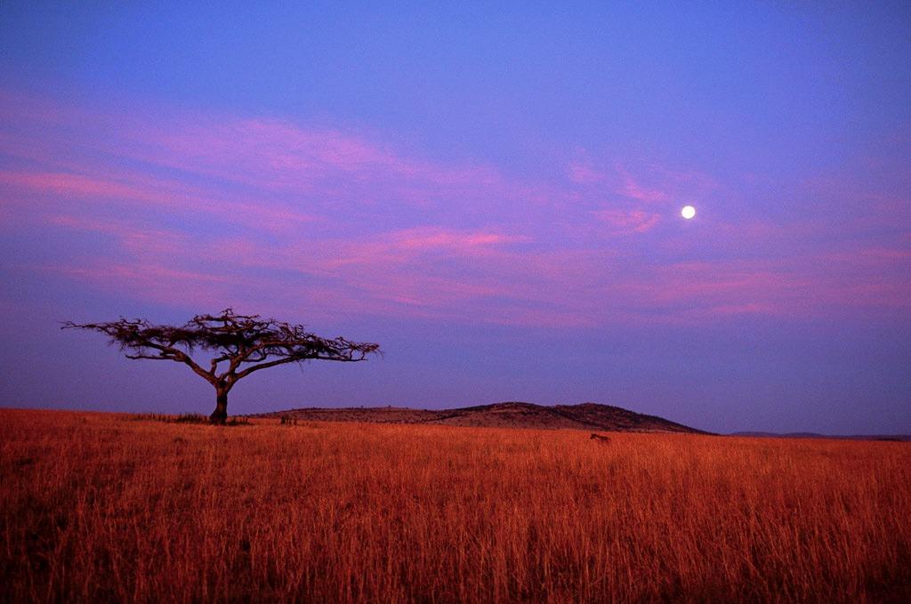 micaia e capim em Moçambique