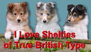 """BREEDING SHELTIES OF TRUE BRITISH TYPE"""