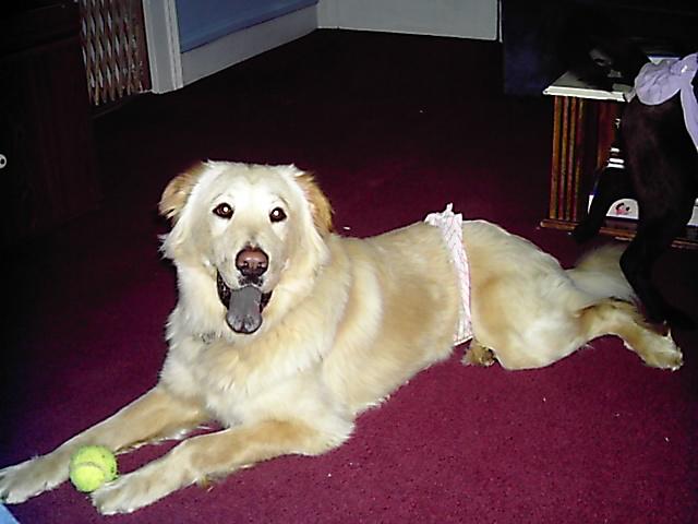 Tutored Far Side Comic Dog