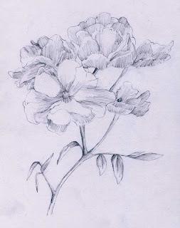 Sketsa Gambar Bunga Gelap Terang Sketsa