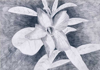 78 Gambar Arsiran Pot Bunga