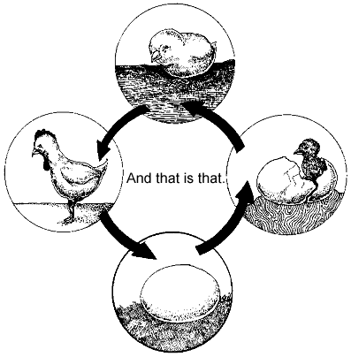 Life Cycle Of A Chicken Coloring Page