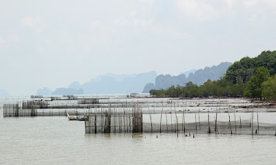 Shell farming at Koh Yao Noi