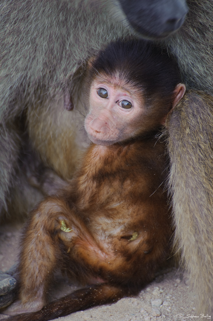 Adorable Baby Monkey Wallpapers Celebrity