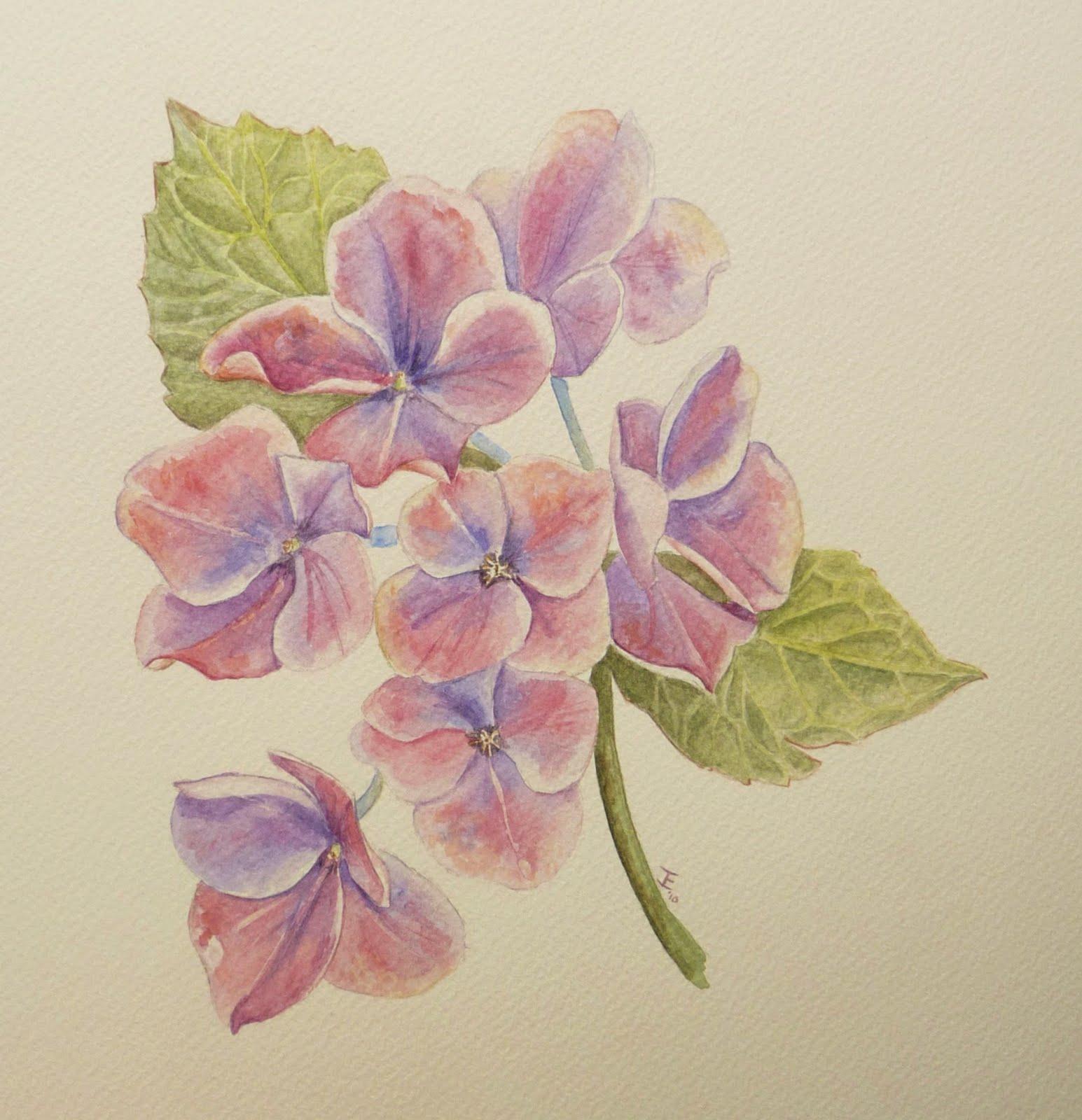 Schilderijen van orchidee n andere botanische werken for Schilderijen van bloemen