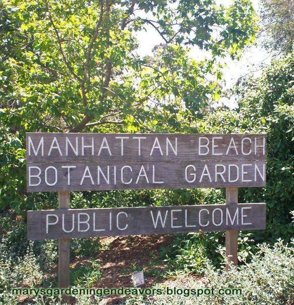 Mary 39 s gardening endeavors manhattan beach botanical garden - Manhattan beach botanical garden ...