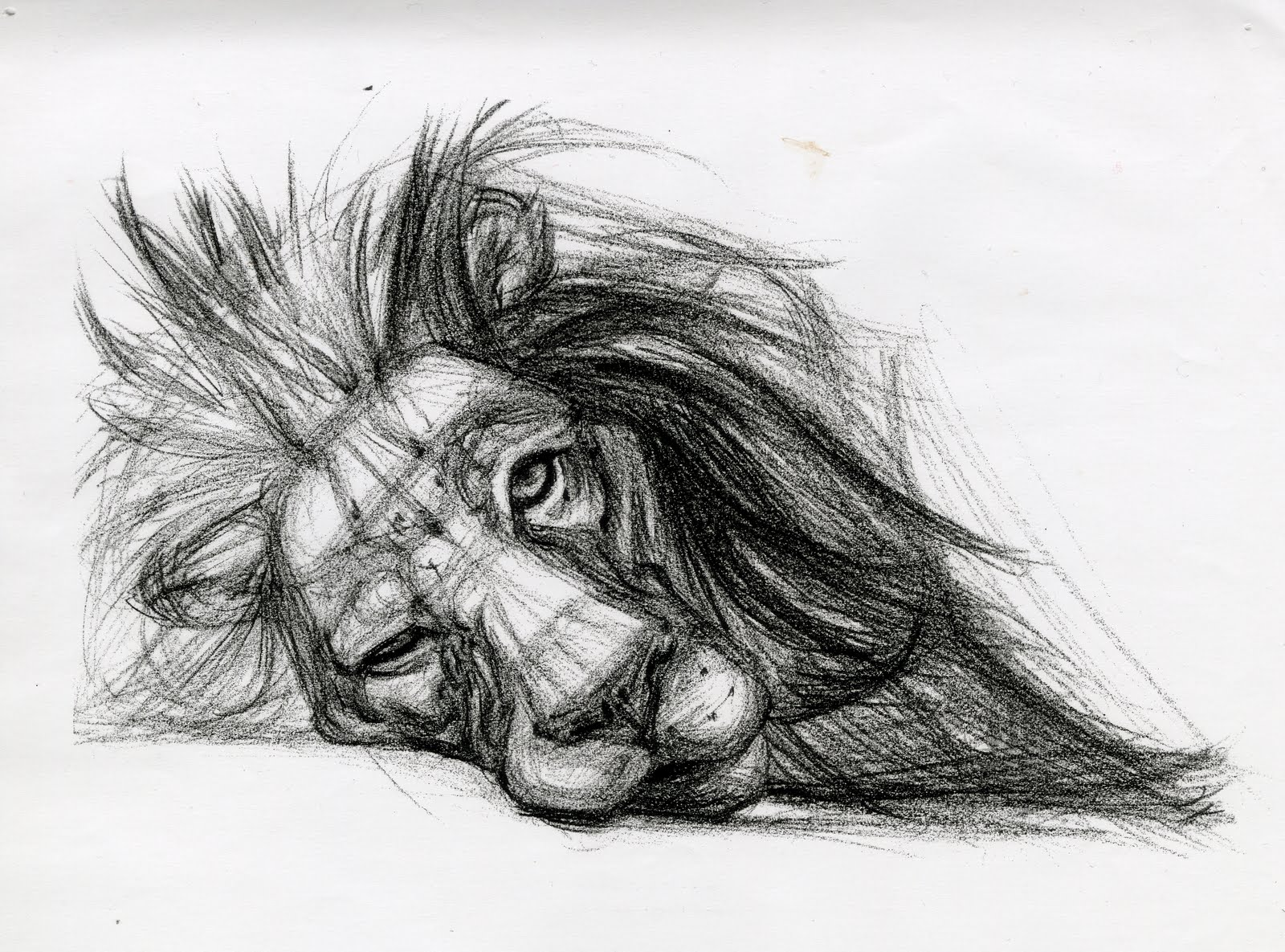 drawings animal lion candace cool pencil drawing sketch hard really very