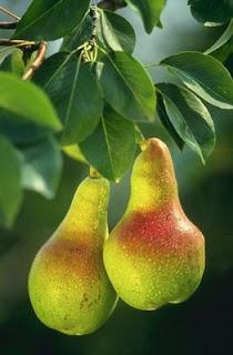 Cuentos en español/Spanish stories/Ana y Fruta