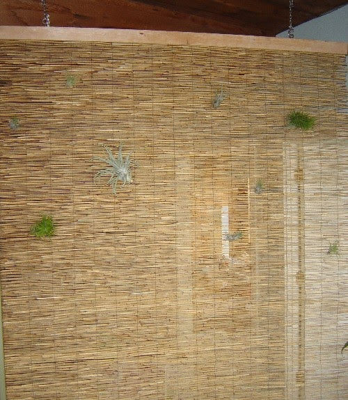 Room Divider Diy Tropical Style