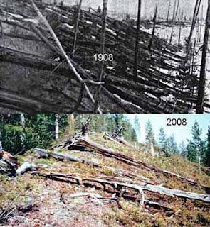 Tunguska 1908-2008