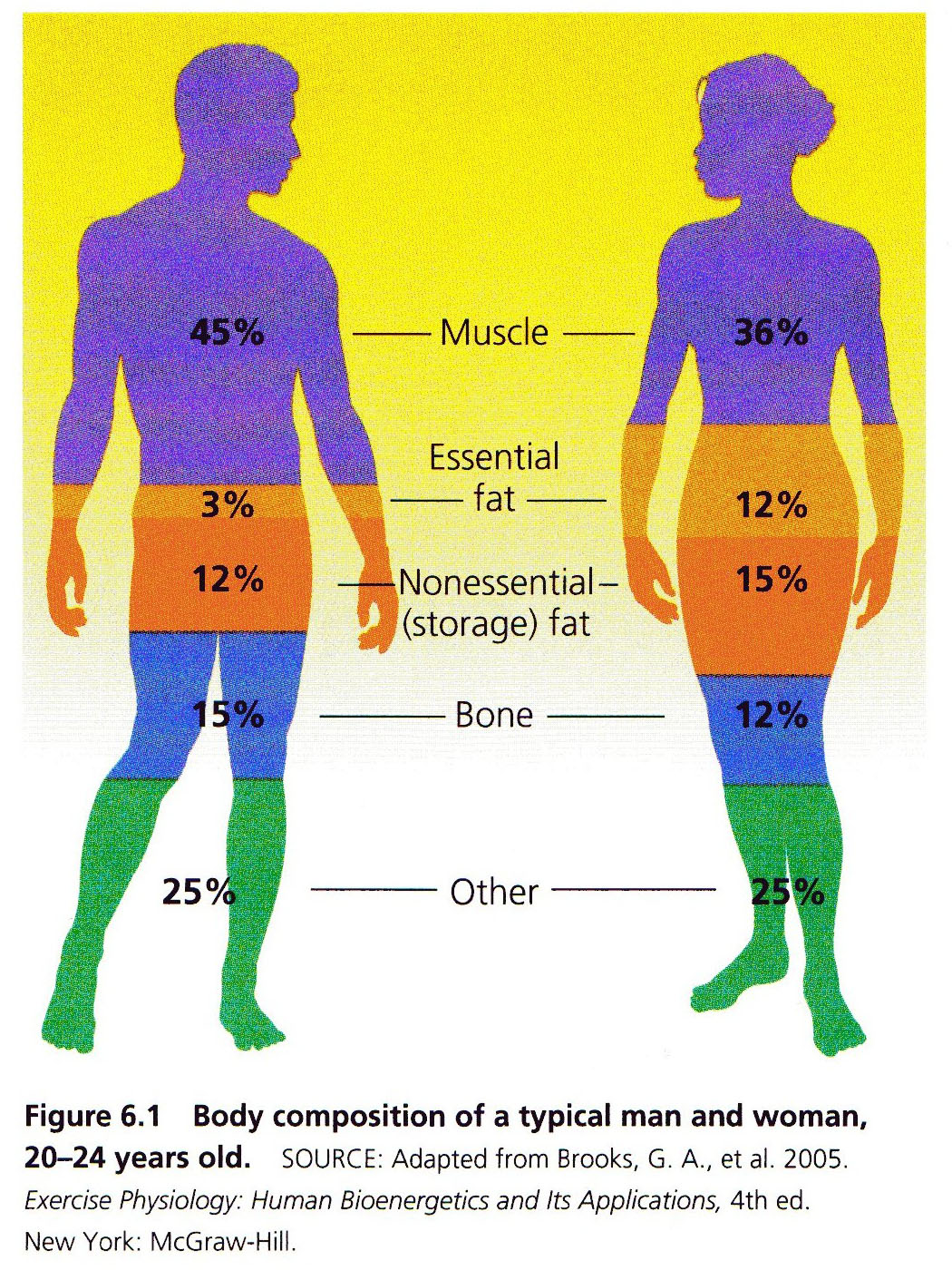 Whollywell Understanding Energy Use And The Fat Burning Zone