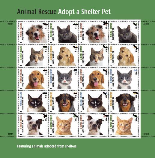 Animal Protection Decision Essay