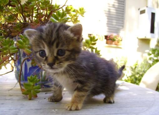 Conosciuto Foto gattini piccoli TY22
